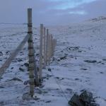 Sobí plot