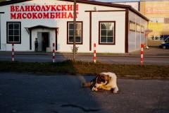 Bělomorský pes