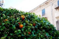 (Kyselé) pomeranče všude