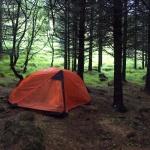 Stanování v lese