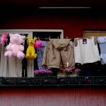 Ze života kosovských plyšáků