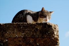 Mafiánská kočka z Agrigenta
